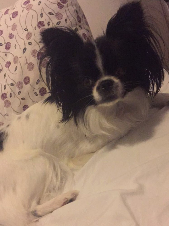 min hund puster