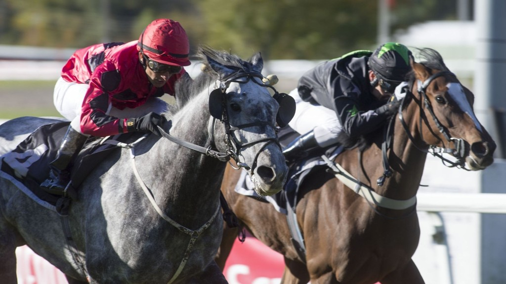 Rafael De Oliveira (vinner her med Majestix Max på Øvrevoll onsdag - grå hest) rir Nettavisens V4-banker på Klampenborg lørdag. Foto Roger Svalsrød hesteguiden.com