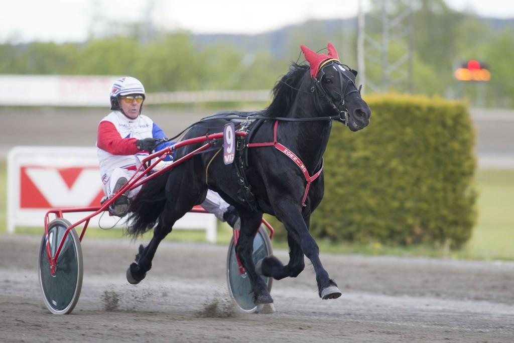 Thor Borg, og Lustra Loke får mange tilhengere i totoen søndag. foto_Roger Svalsr¿d_hesteguiden.com