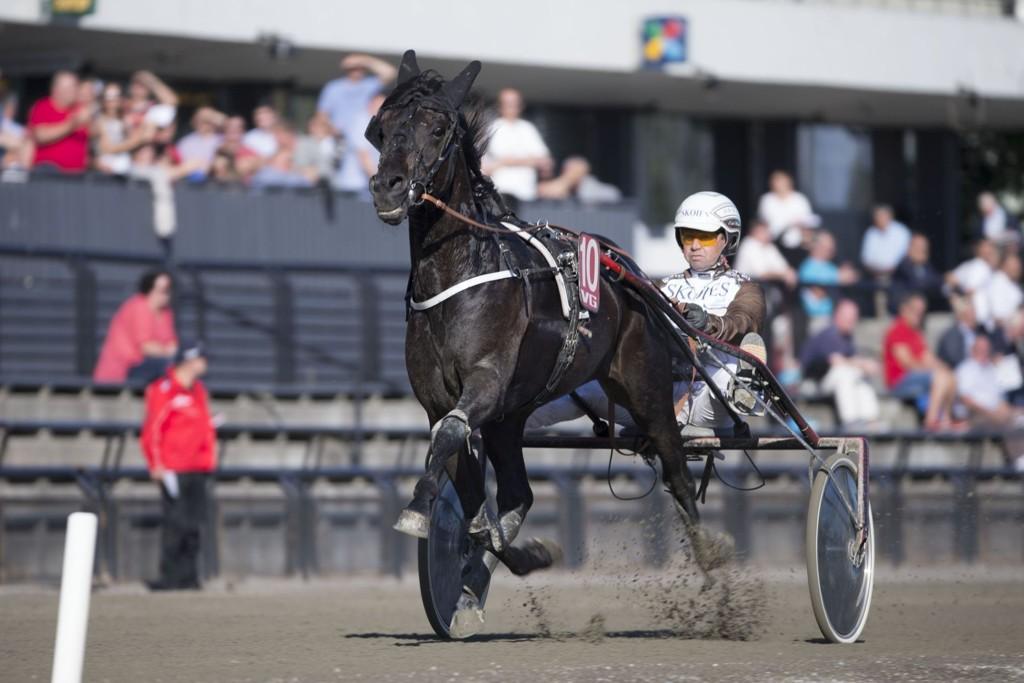Viking Arrow, og Eirik Høitomt blir et holdepunkt for mange på lørdag. foto_Roger Svalsr¿d_hesteguiden.com