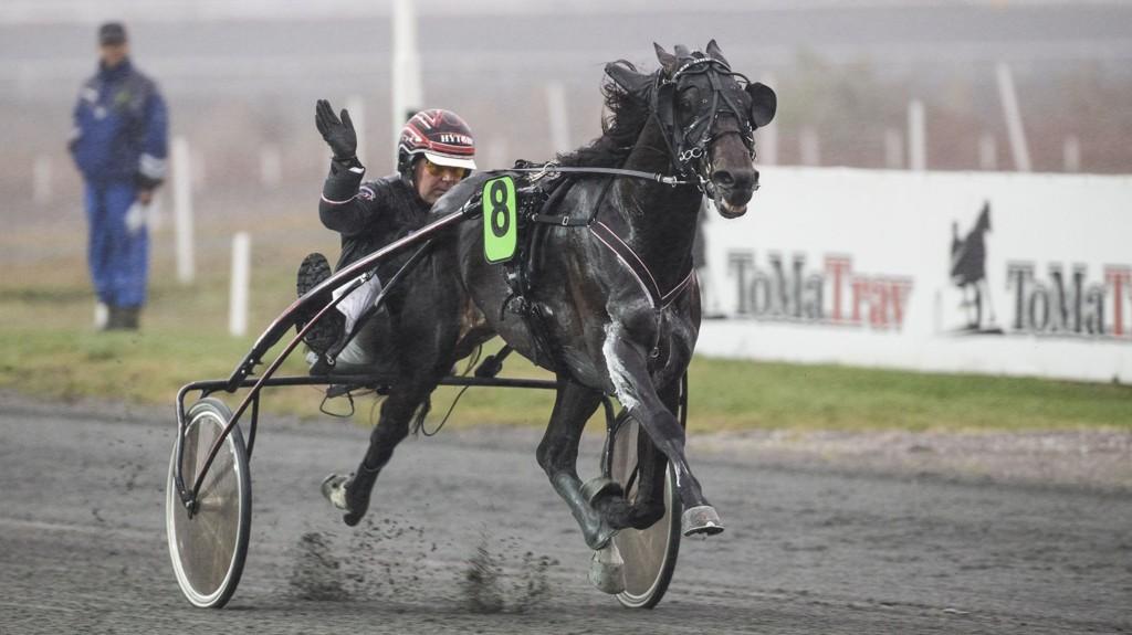 Glen Ord Superb og Geir Vegard Gundersen har hatt en strålende sesong. Foto Roger Svalsrød hesteguiden.com