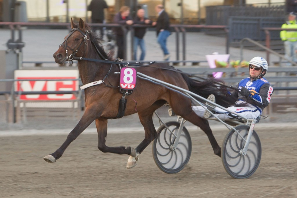 Pål Buer kjører flere av dagens tyngste favoritter på Bergen Travpark. Foto: Anders Kongsrud/www.hesteguiden.com.