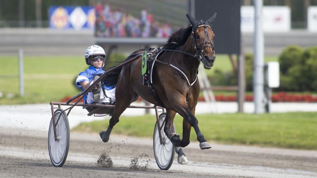 Erik Adielsson kjører vår banker på søndag. foto_Roger Svalsr¿d_hesteguiden.com