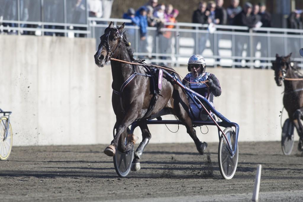 Ulf Ohlsson kjører vår banker denne mandagen. foto_Roger Svalsr¿d_hesteguiden.com