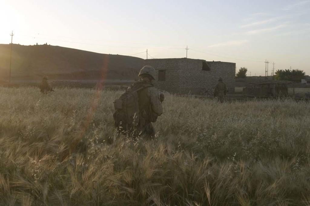 En amerikansk soldat beveger seg gjennom en irakisk kornåker under Irak-krigen i 2005. Irakisk korn og landbruk kan utgjøre en enorm inntekt for Den islamske stat, dersom terrorgruppen selger kornet på det svarte markedet.