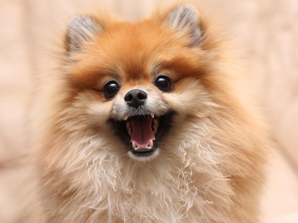 GLAD I MENNESKENE SINE: Finnes det noen som er mer glad for å se deg her i verden enn hunden din?