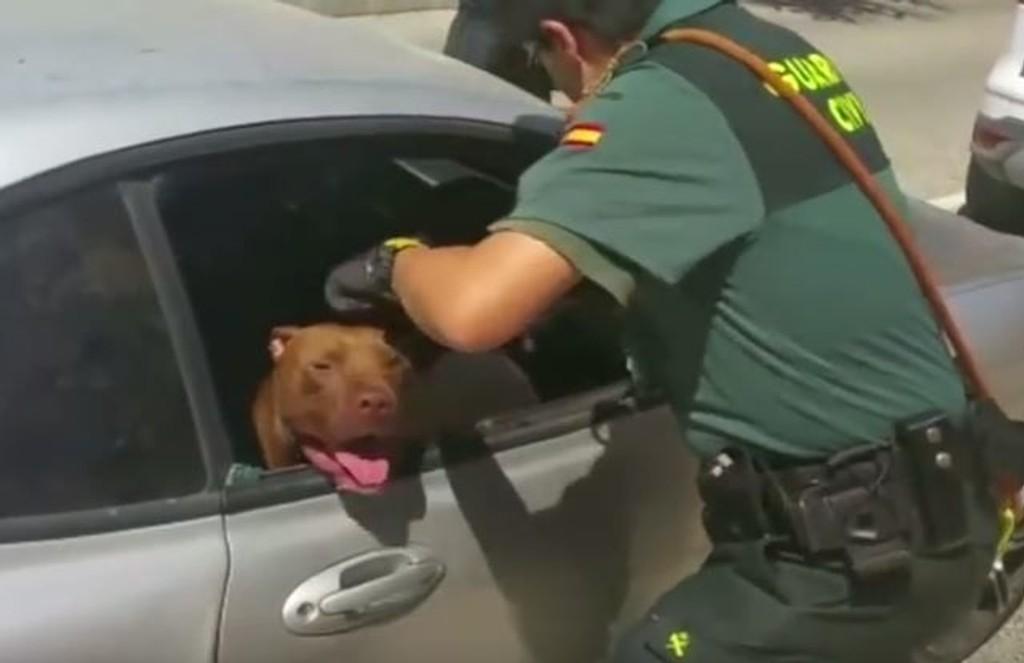 hunden peser i bilen