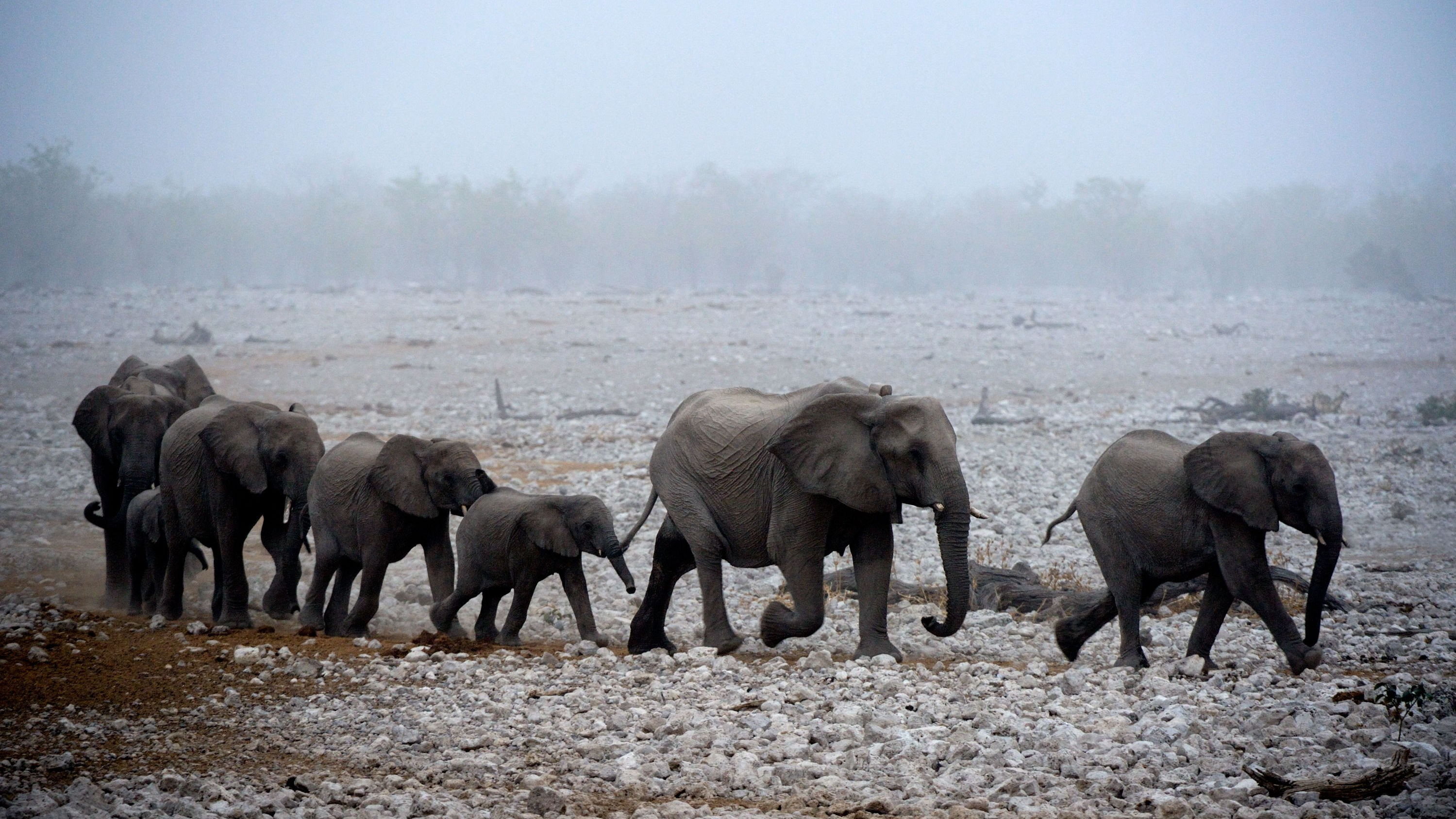 I løpet av 50 år vil mennesker ha utryddet to tredeler av jordens dyr. Det vil skje allerede i 2020 om ikke menneskeheten kollektivt tar seg sammen, advarer World Wide Fund for Nature (WWF).