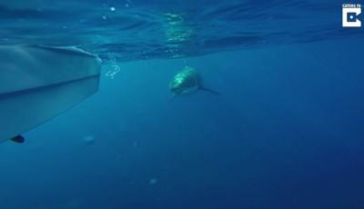 Her er hvithaien få meter unna fiskernes 15-fots båt.