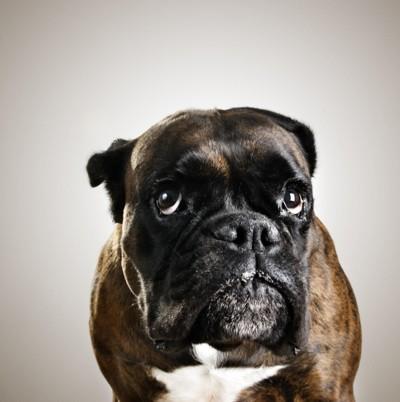 IKKE SKYLD, MEN FRYKT: Det skyldige blikket oser av dårlig samvittighet, ikke sant? Nei, det bare ser slik ut for oss mennesker, hevder forsker og hundeekspert Alexandra Horowitz. I virkeligheten er hunden redd.