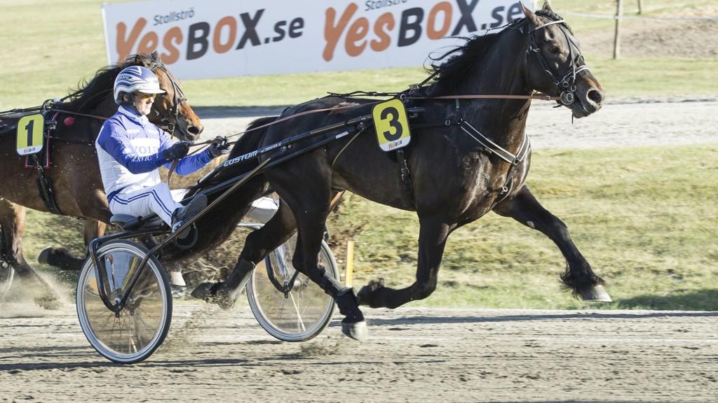Formsterke Rakkerfanten blir stor favoritt i V65-3 på Momarken fredag kveld. Foto: Morten Skifjeld/Hesteguiden.com