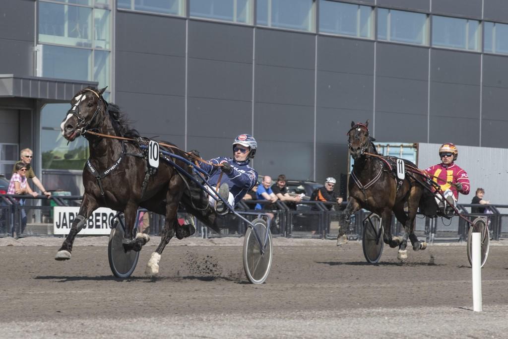 Øystein Tjomsland og Holene Odin. Tirsdag kommer de ut på Sørlandet. Foto Morten Skifjeld/Hesteguiden.com