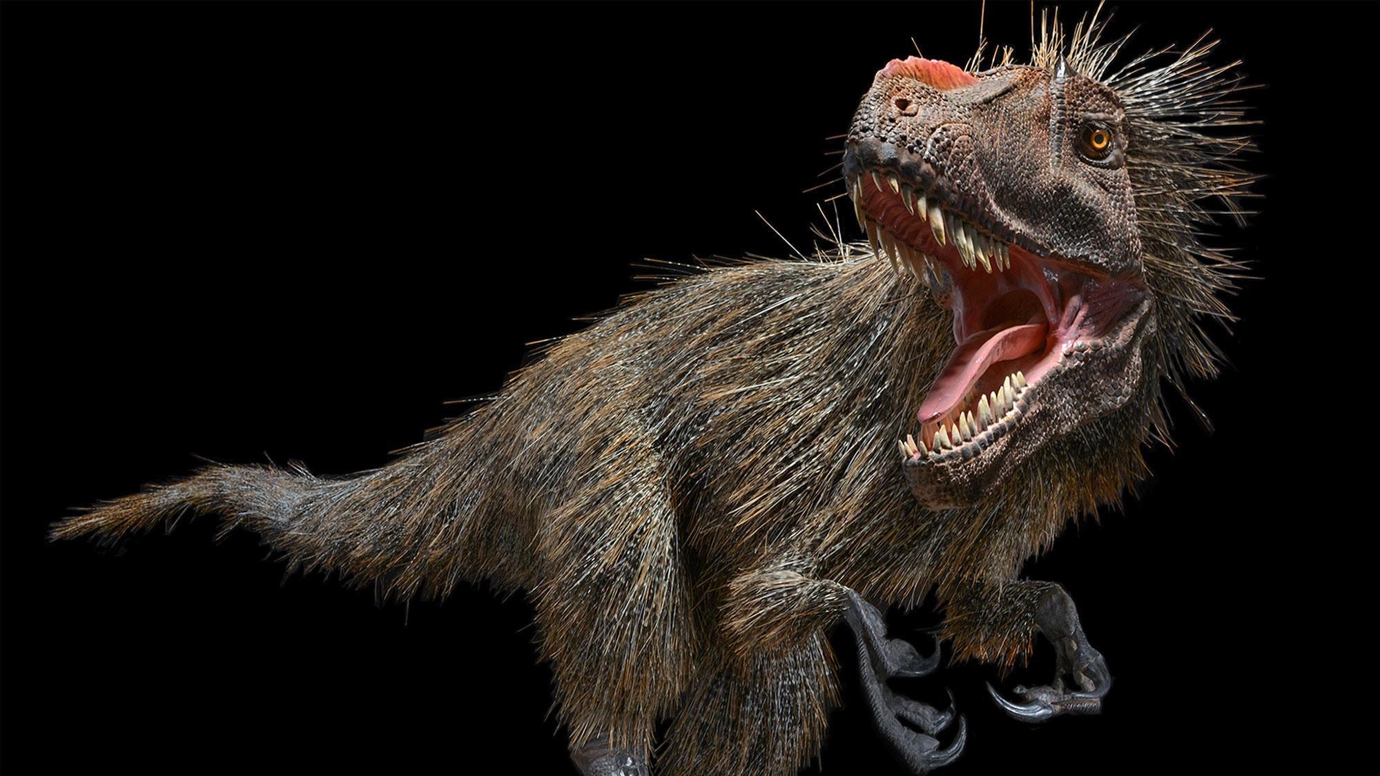 Det ble nylig nærmest slått fast at T-rex hadde fjær. Det avkrefter nå ny forskning som mener tyrannusarus-familien mistet fjærene 30-40 millioner år før T-rex herjet.