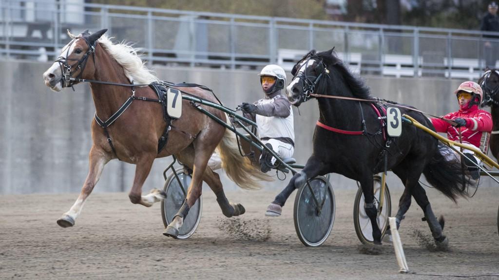 Tangen Marte innerst på dette bildet måtte gi seg for Lille Olga og Eirik Høitomt på Momarken sist. Torsdag har Solberg-hoppa en fin oppgave i V5-2 på Klosterskogen. Foto: Roger Svalsrød: Hesteguiden.com