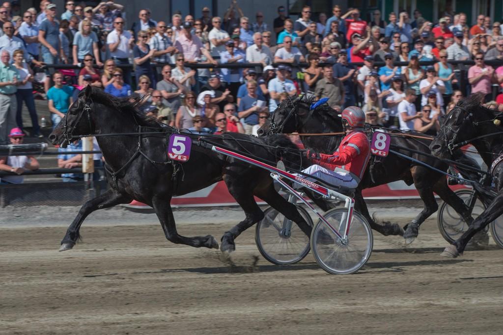Månprinsen A.M. og kusk Gunnar Melander tar turen til Leangen på lørdag. Foto: Anders Kongsrud/www.hesteguiden.com.