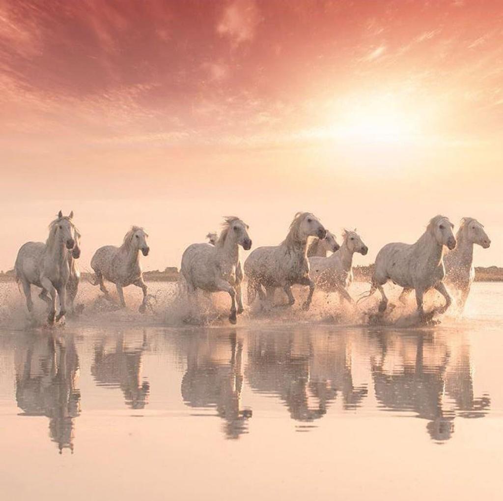 BILDET: Fotograf Charlotte Spetalen høster anerkjennelse for sitt bilde «GoldenHour» av hester på stranden i Camargue.