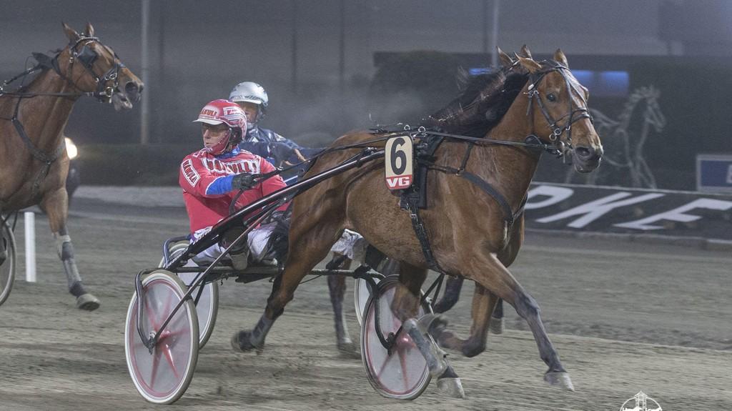 Super Orlando vinner V76-6 på Bjerke 1/11. I kveld blir hesten klar favoritt i V76-5 sammen med Åsbjørn Tengsareid. Foto: Roger Svalsrød: Hesteguiden.com