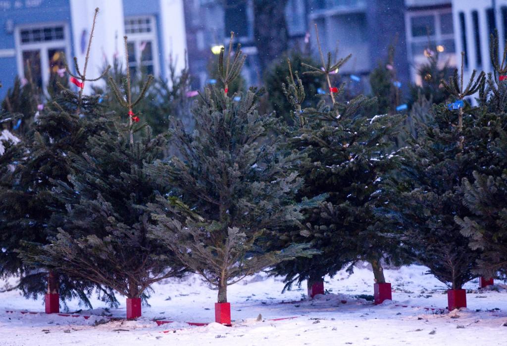 KLARE FOR JUL: Juletreprisene holder seg stabile og på samme nivå som i fjor. Det er også nok trær i markedet, opplyser juletreprodusentene.