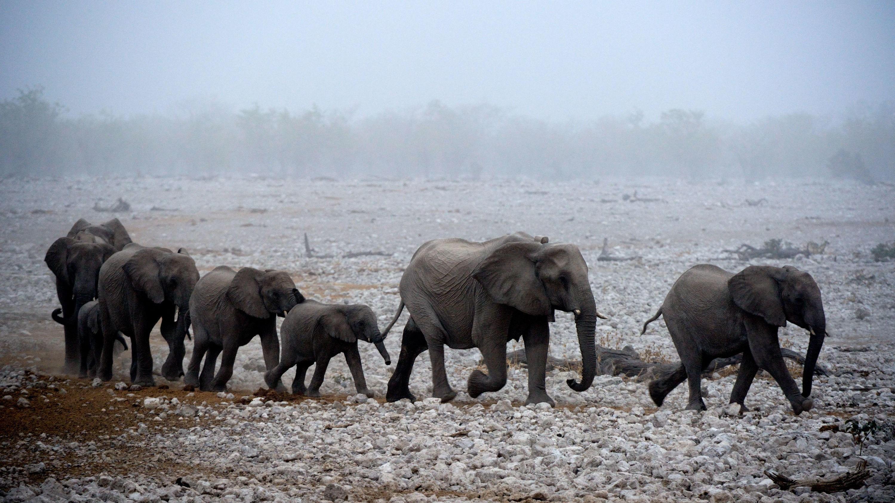 SKREMMENDE ADVARSEL: I løpet av 50 år vil mennesker ha utryddet to tredeler av jordens dyr. Det vil skje allerede i 2020 om ikke menneskeheten kollektivt tar seg sammen, advarer World Wide Fund for Nature (WWF).