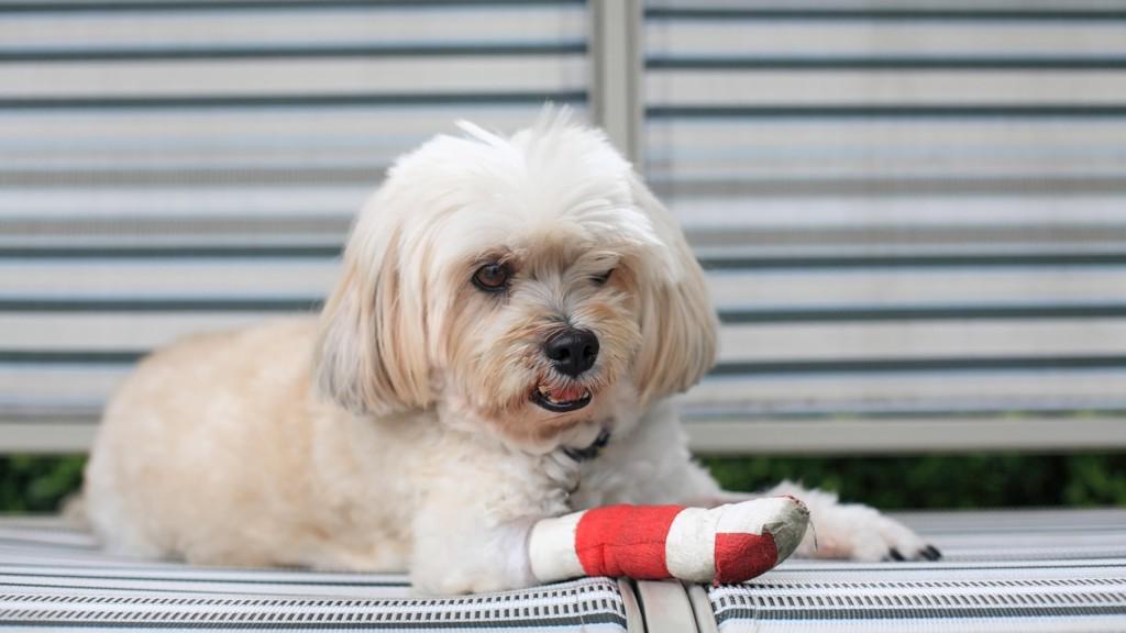 SKADET HUND: Hvem ringer du til hvis du finner en skadet hund? Nå tar DNB initiativ til et eget nødnummer for dyr.