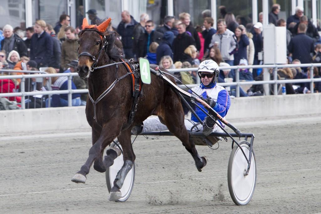 Kaj Widell er aktuell i dagens V4-omgang. Foto Morten Skifjeld/Hesteguiden.com
