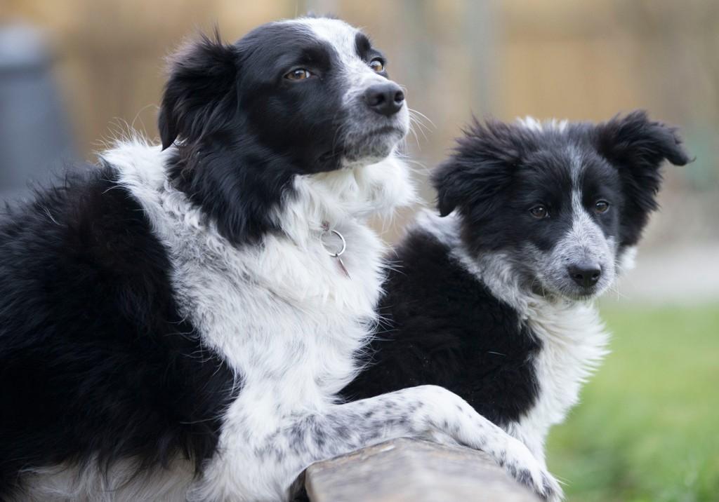 Hunder er menneskets beste venn - men også en betydelig miljø- og klimabelastning.