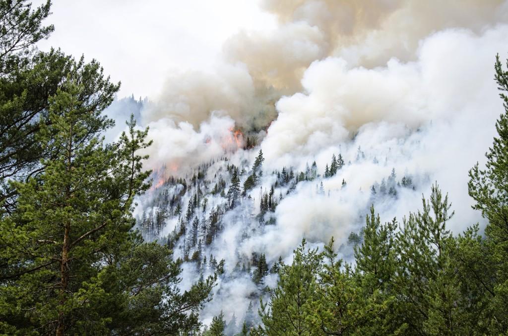 Det er meget stor skogbrannfare mange steder i Norge. Dette bildet ble tatt under en større skogbrann mellom Sel og Brennhaug i Oppland tilbake i 2014. Foto: Lasse Stadeløkken / NTB scanpix