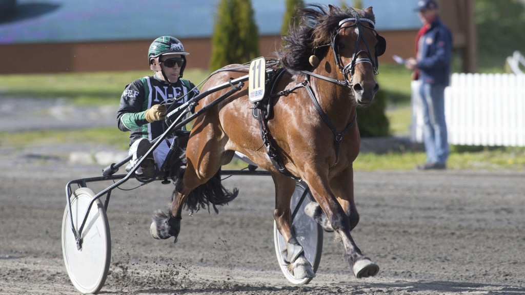 Frøyu Petter jager den fjerde strake seieren i dag. Foto: Roger Svalsrød: Hesteguiden.com