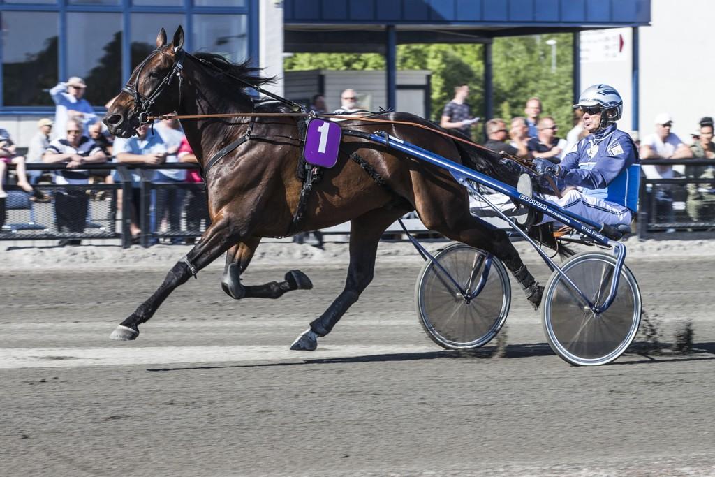 Frode Hamre og Vainqueur R.P. Lørdag kommer de ut i V75-6. Foto Morten Skifjeld/Hesteguiden.com