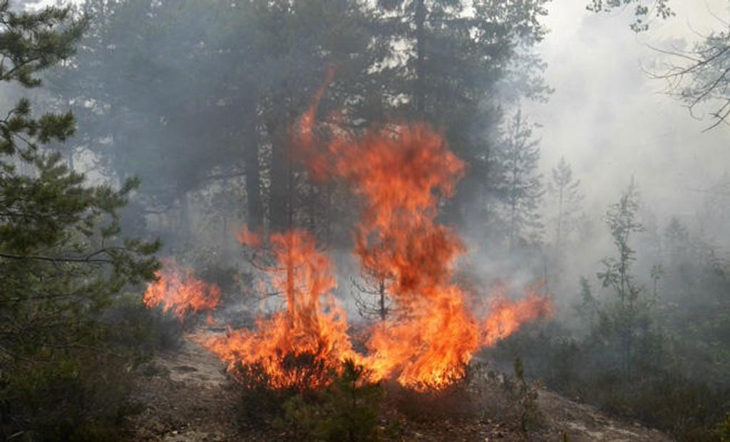 Illustrasjonsfoto. Det er fortsatt skogbrannfare flere steder i landet. Meteorologene oppfordrer folk til å holde seg oppdatert.