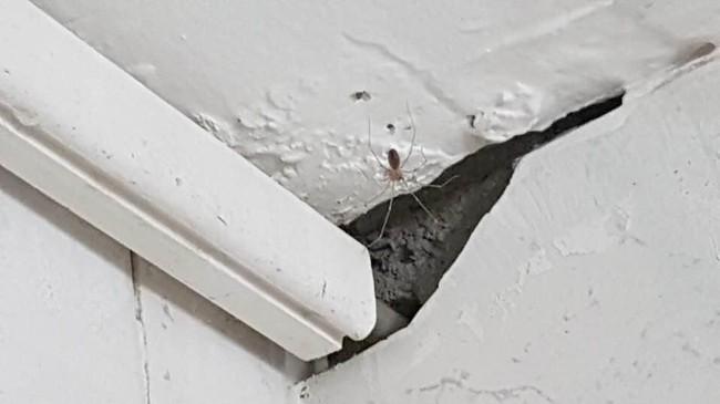 EKLE KRYP: Edderkopper var også å finne på hotellrommet. Foto: Mats Bergstrøm.