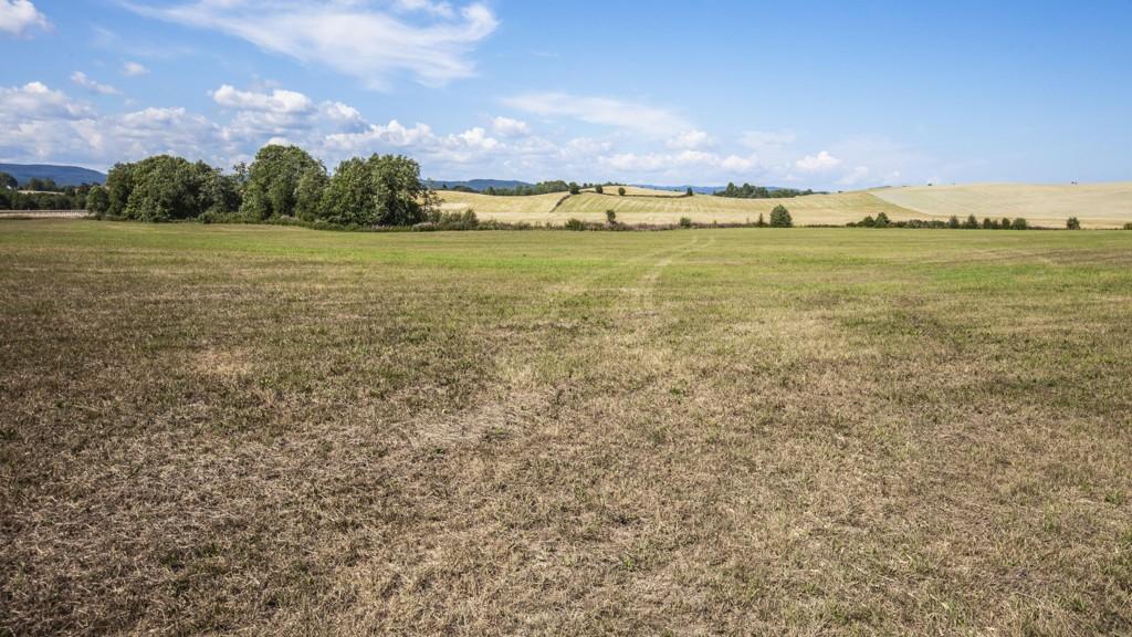 Mange bønder har slitt med tørke i hele sommer, nå kan det koste staten flere hundre millioner kroner. Foto: Halvard Alvik / NTB scanpix
