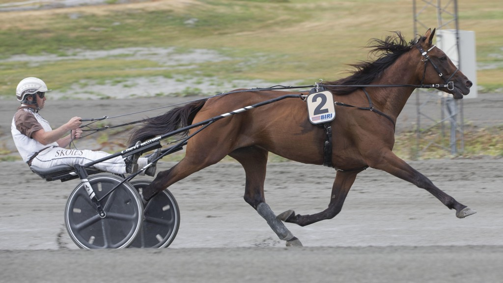 Catherine's Chevy er den store favoritten til å vinne Norsk Travkriterium søndag og blir tung favoritt i V75-4 sammen med sin faste kusk Eirik Høitomt. Foto: Anders Kongsrud/www.hesteguiden.com.