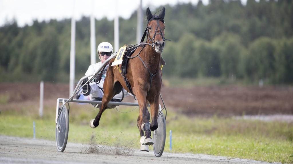 Hans Chr Holm er som vanlig aktuell i Harstad. foto_Roger Svalsrød_hesteguiden.com