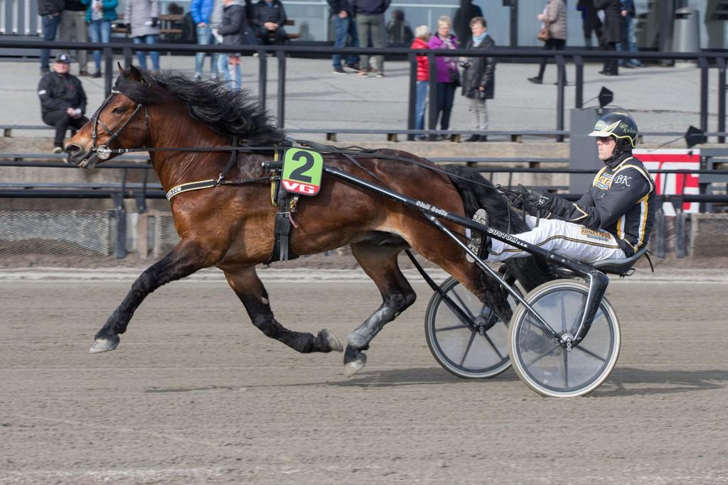 Tangen Haap og kusk Björn Karlsson er aktuell i fredagens V64-omgang. Foto: Anders Kongsrud/www.hesteguiden.com.