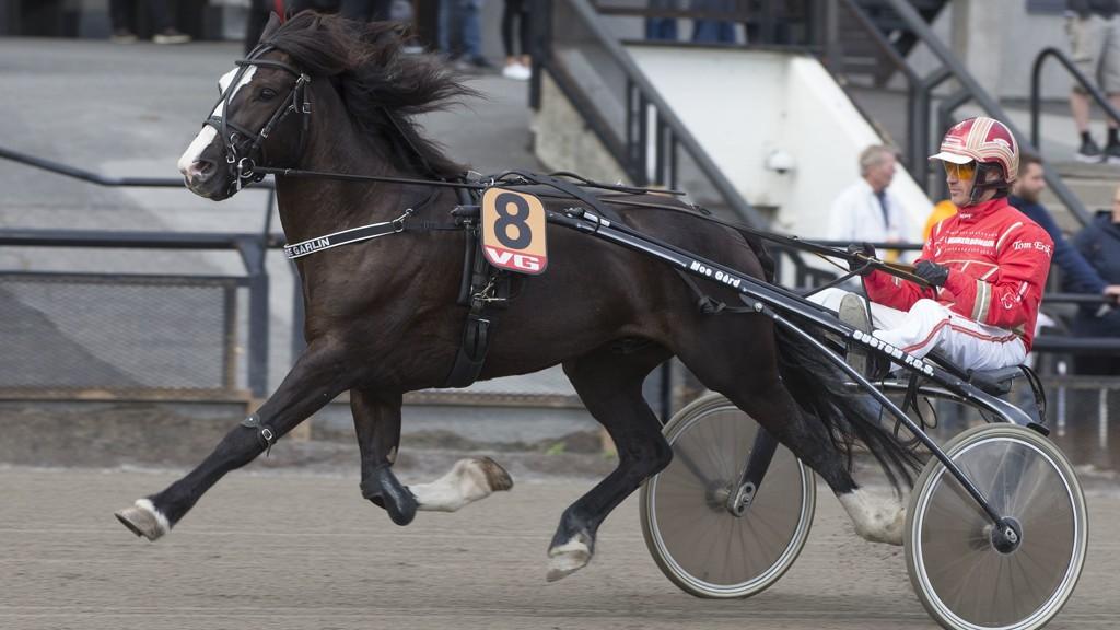 Garli Moe Garlin er en herlig traver, som har fine vinnersjanser på Momarken. Foto: Anders Kongsrud/www.hesteguiden.com.