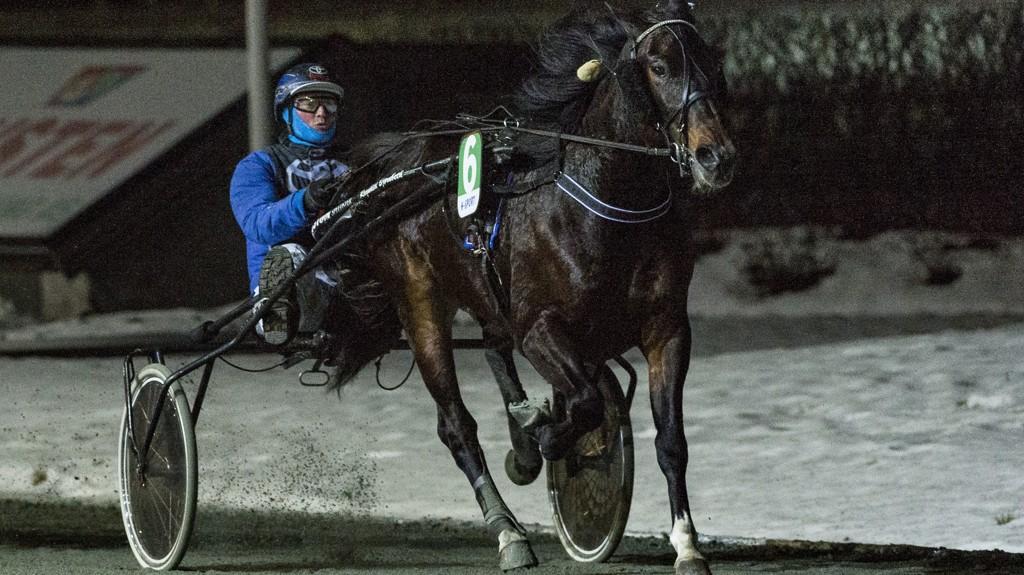 Giggs B.R. gjorde en flott Leangendebut for Arve Sjoner. I dag blir hesten stor favoritt i V5-1 på Leanhen. Foto: Ned Alley: Hesteguiden.com