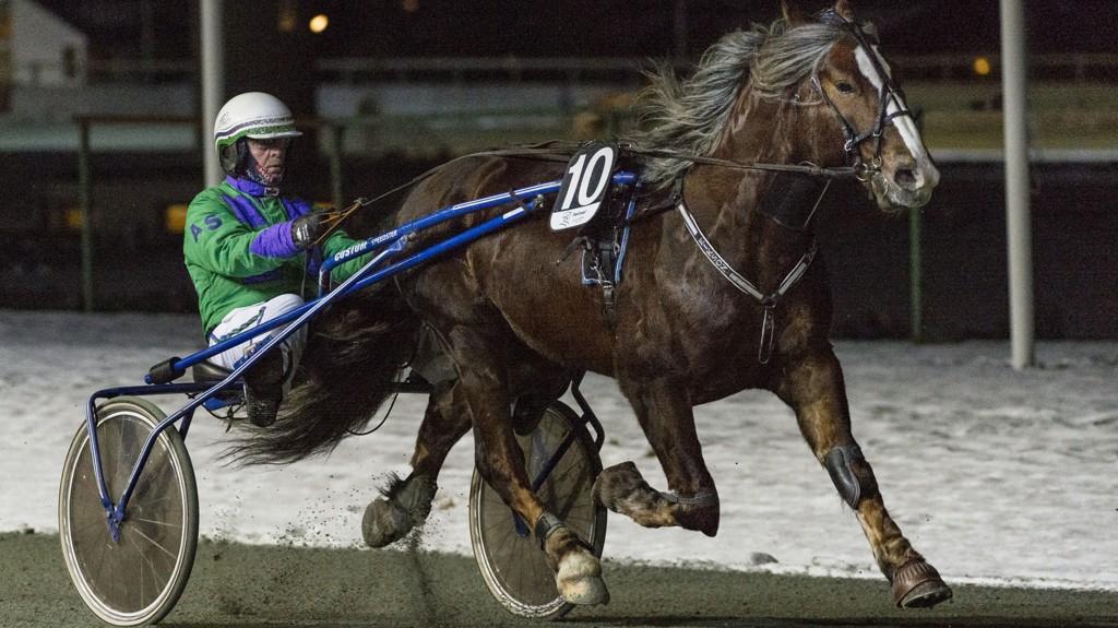 Seiersmaskinen Eik Odin blir storfavoritt i V65-5/V5-2/DD-1 på Leangen i kveld. Her ser vi Eik Odin i seiersløpet på Leangen 17. desember i fjor sammen med sin faste kusk Atle Solhus. Foto: Ned Alley: Hesteguiden.com
