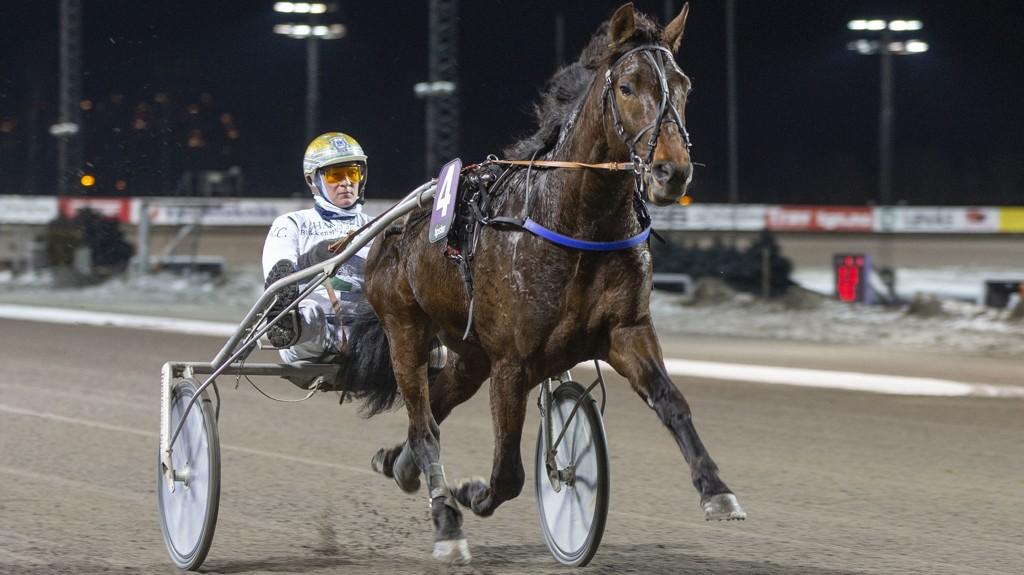 Strong Pepper er veldig talentfull og skal ha en god vinnersjanse i V4-2 på Bjerke torsdag. Foto: Anders Kongsrud/ www.hesteguiden.com.