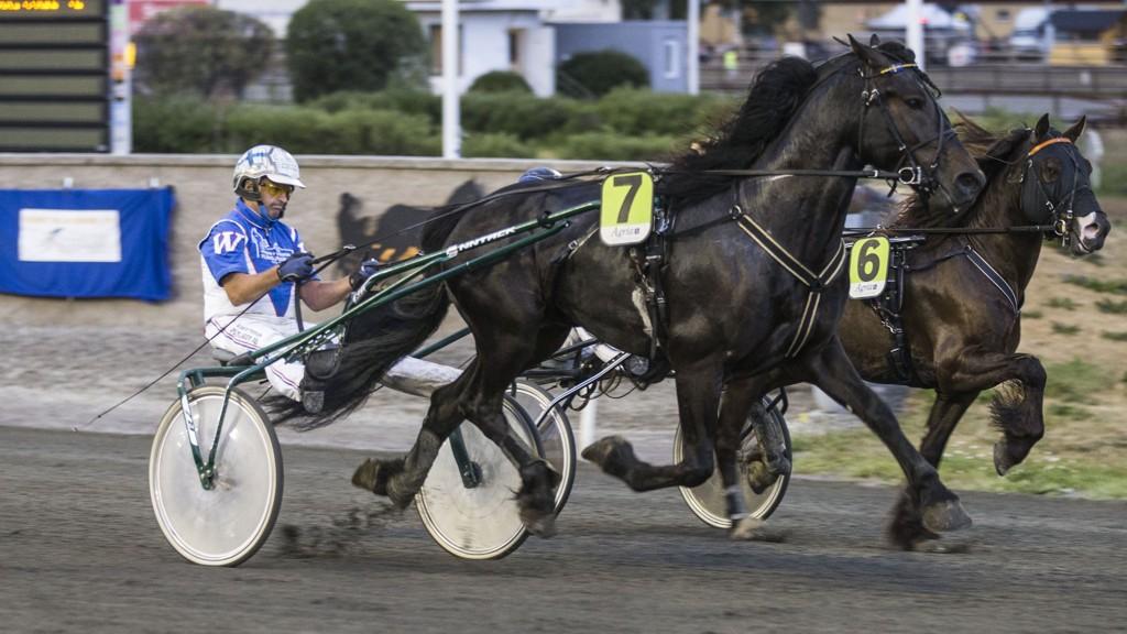 Kaj Widell har flere fine hester å kjøre i V4-lunsjen på Eskilstuna. Foto: Morten Skifjeld/ Hesteguiden.com