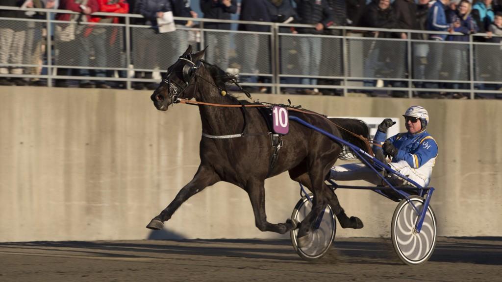 Veijo Heiskanen er aktuell i dagens V64-omgang. foto_Roger Svalsrød_hesteguiden.com