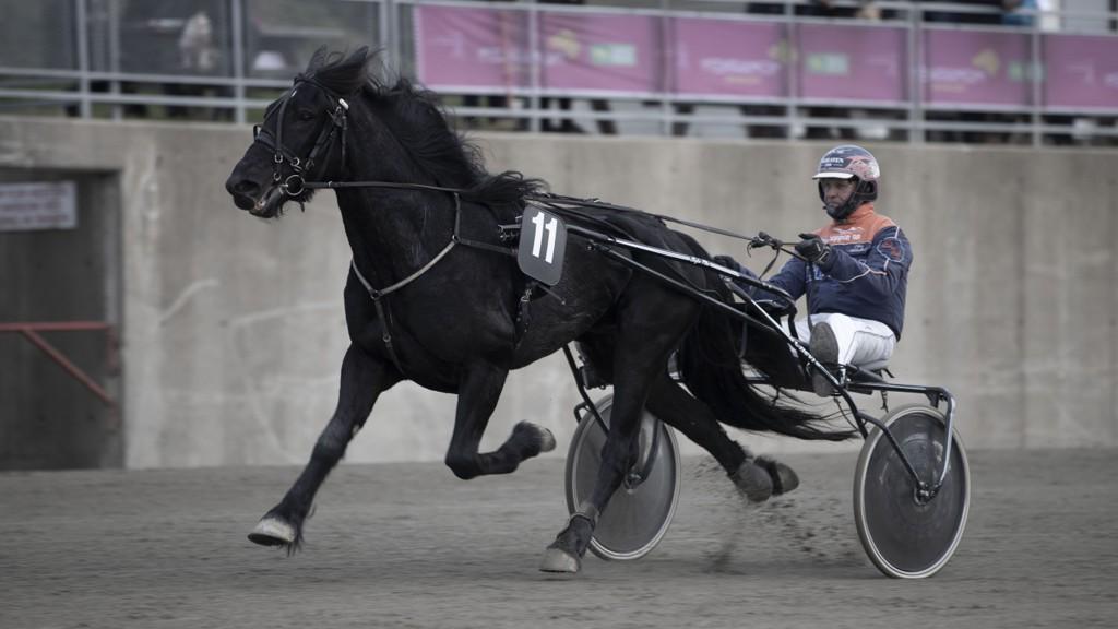 Olav Mikkelborg har en god sjanse i den fjerde avdelingen. Foto: Roger Svalsrød/ hesteguiden.com