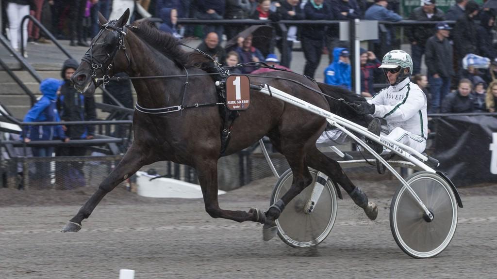 Hedershesten Slide So Easy har en flott vinnersjanse i V75-5 på Charlottenlund søndag sammen med sin trener Flemming Jensen Foto: Morten Skifjeld/Hesteguiden.com