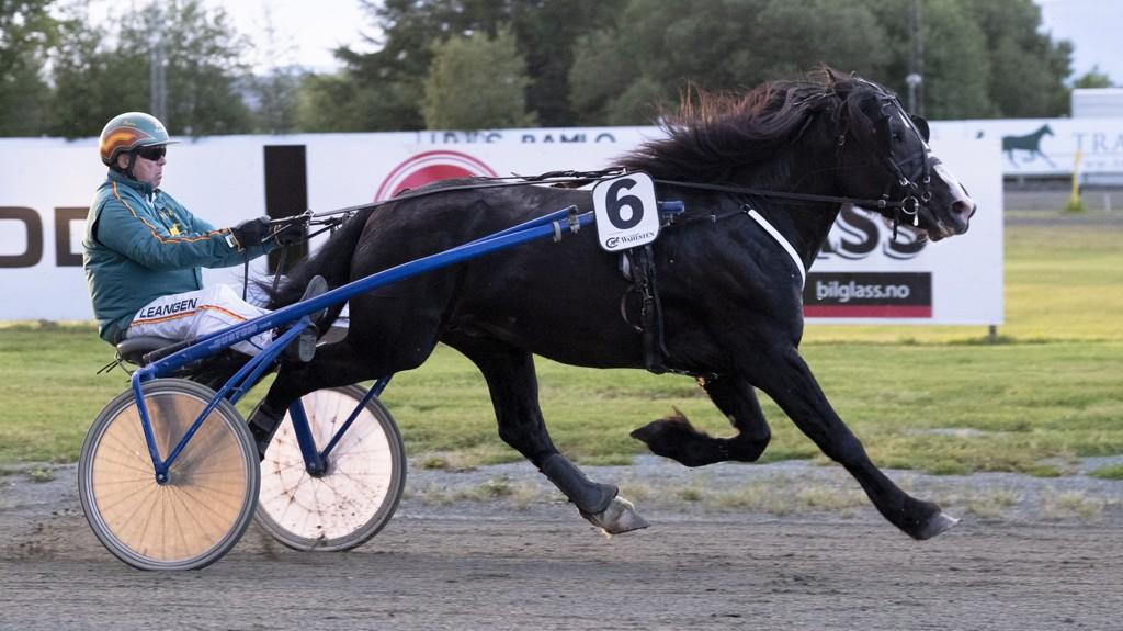 Bjørn Garberg har vunnet sju løp med Vill Jerven i 2019. I kveld jakter Garberg seier nummer 2 000. Foto: Ned Alley: hesteguiden.com