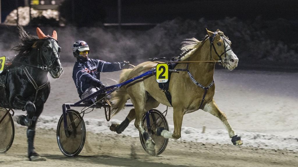 Langlands Odin har gjort en start på Klosterskogen i år. Da infridde hesten som stor favoritt. I kveld blir Langlands Odin og Vidar Tjomsland vår V65-banker på Klosterskogen. Foto: Morten Skifjeld/Hesteguiden.com