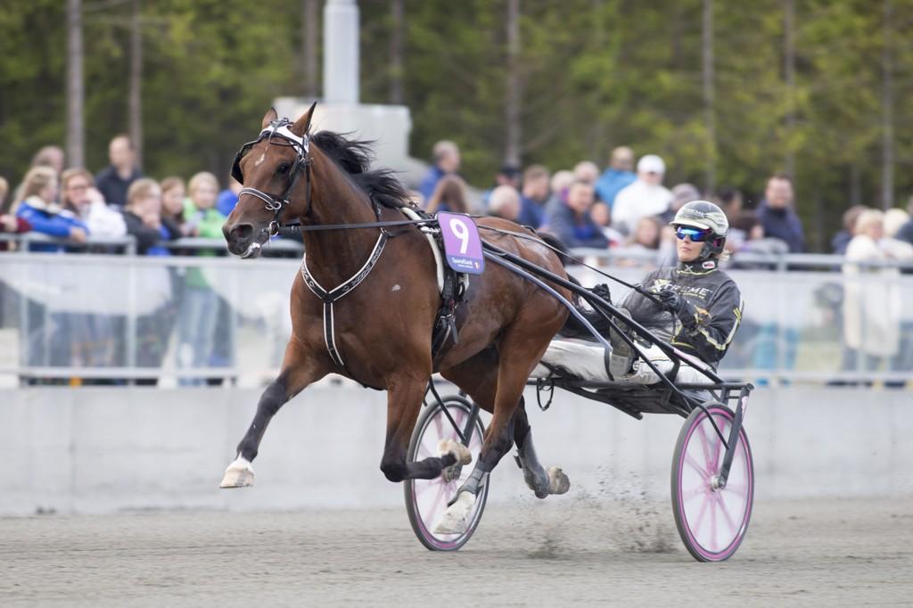 Hanna Olofsson er på plass og kjører i lunsjen i Boden fredag. Foto: Roger Svalsrød, hesteguiden.com