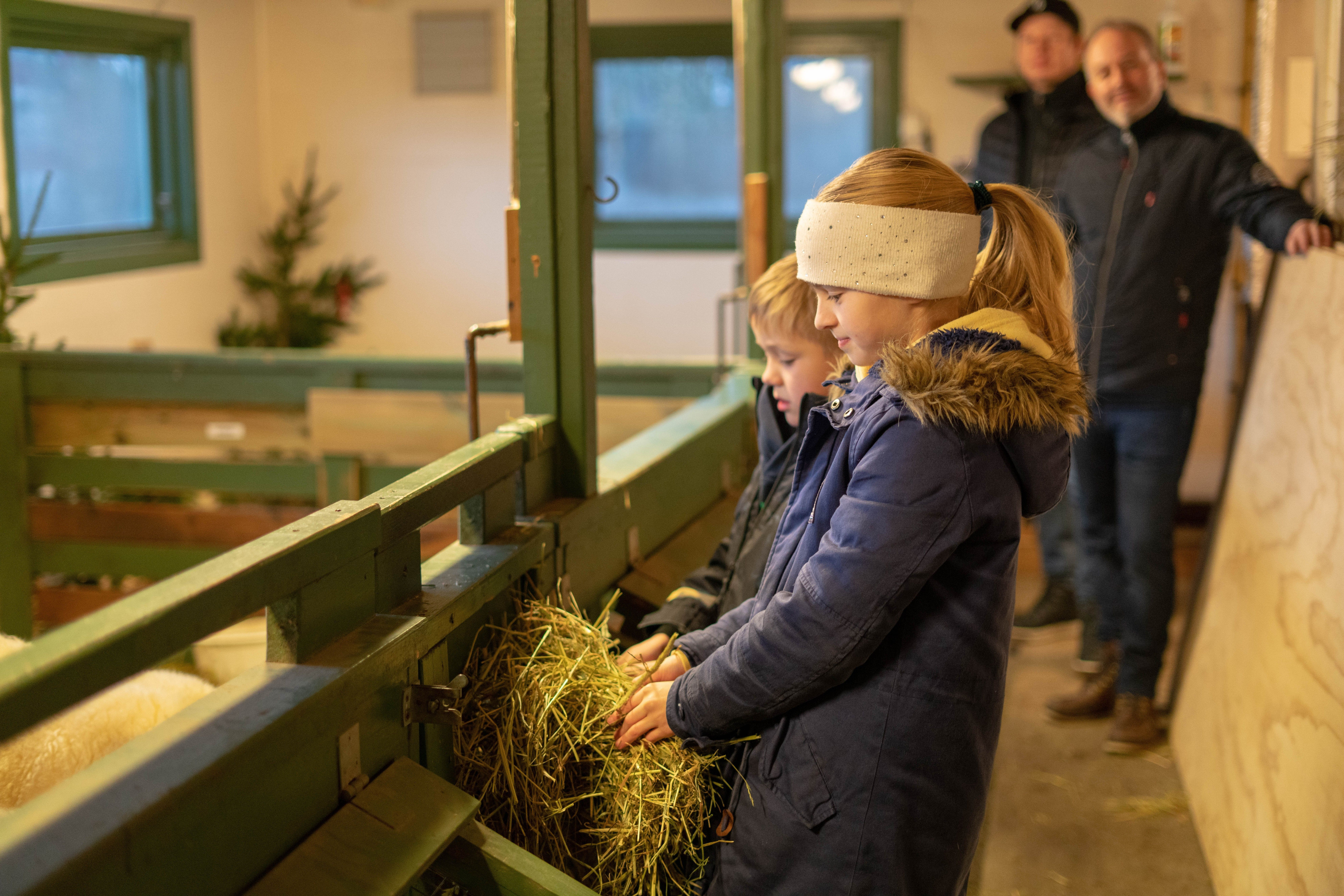 Anniken (11) og Kasper (7) mater sauene som bor på Klyve skoles SFO sin bondegård.
