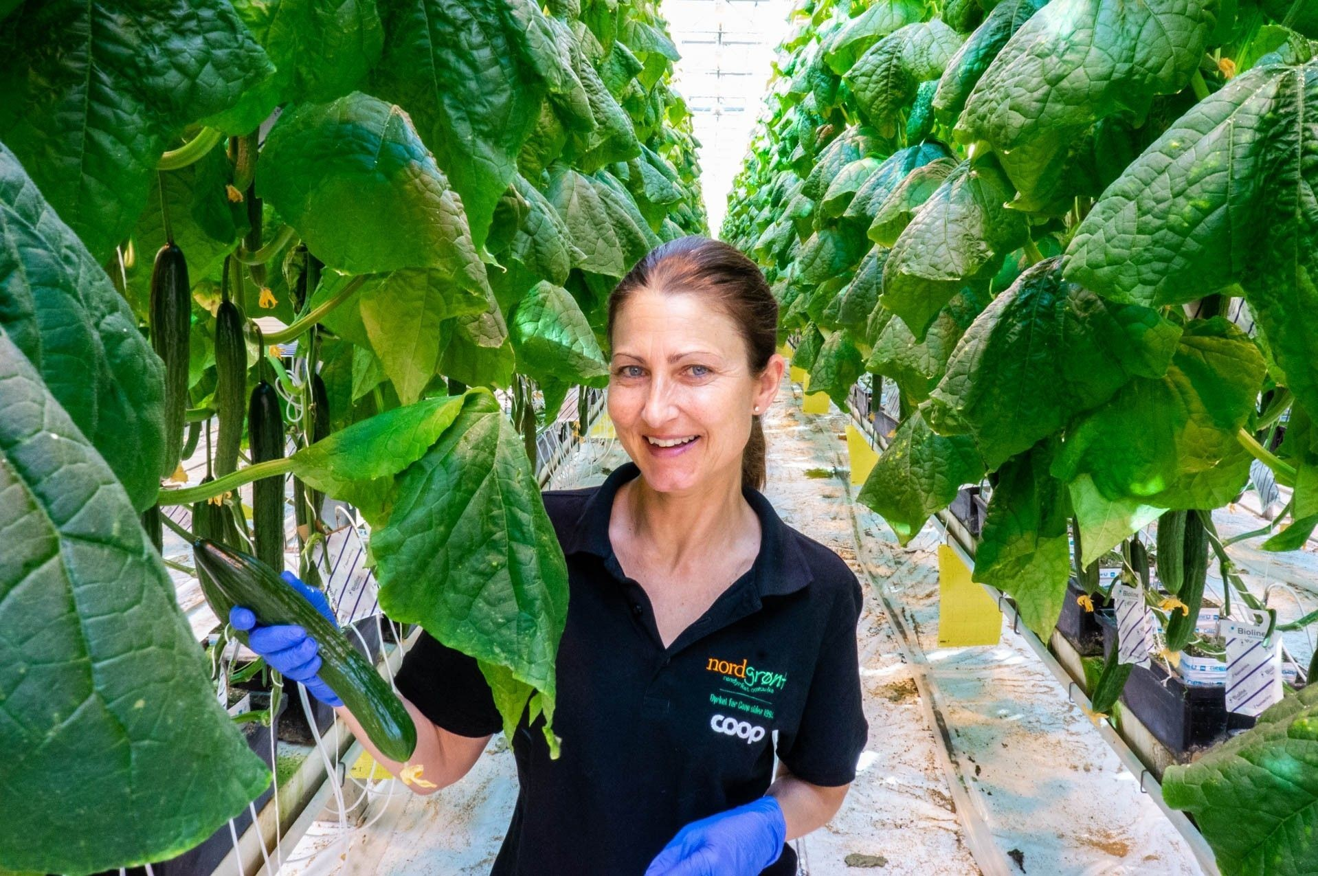 STOLT GARTNER: Inger-Irén Eriksrud er tredjegenerasjons gartner og driver fortsatt familiegården i Lier. Her dyrker hun agurk, blomkål og vårløk for Coop-butikker over hele landet.